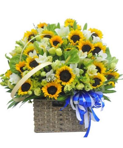Lẵng hoa lan chúc mừng - DH149