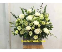 Hoa chúc mừng đẹp nhẹ nhàng - DH366