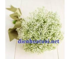 Hoa sao - DH170