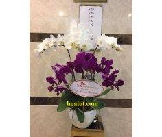 Phong lan 6 cây đẹp - DH548