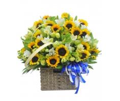 Lẵng hoa lan chúc mừng