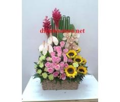 Hoa chúc mừng đẹp - DH323