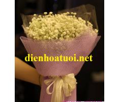 Hoa baby - DH372