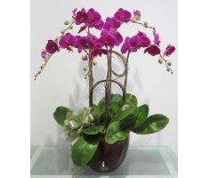 Hoa lan hồ điệp - DH338