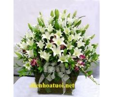 Giỏ hoa loa kèn - DH402