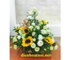 Hoa chúc mừng đẹp - DH193