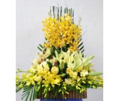 Lẵng hoa lan chúc mừng - DH328
